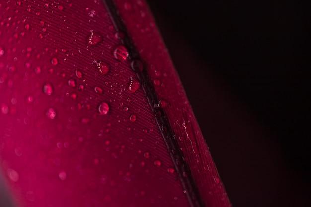 Detalhe, de, gotas, ligado, a, pena vermelha, contra, experiência preta Foto gratuita
