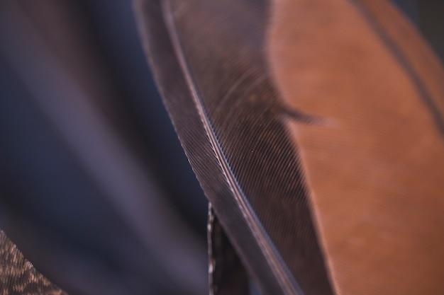 Detalhe, de, marrom preto, pena, fundos Foto gratuita