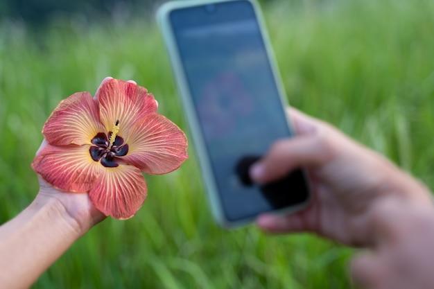 Detalhe de uma mão fazendo uma foto com o celular para uma flor que segura na mão Foto gratuita