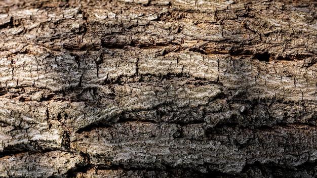 Detalhe e textura da casca marrom de uma árvore. Foto Premium