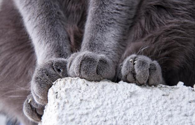 Detalhe, tiro, de, macio, gato, patas, enquanto, sentando Foto Premium