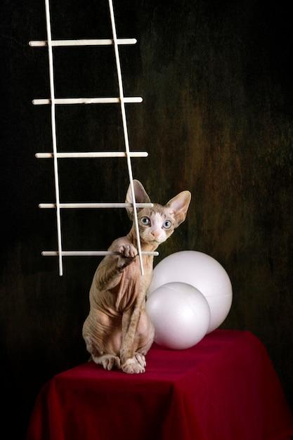 Devon rex raça gatinho em uma mesa vermelha com bolas brancas Foto Premium