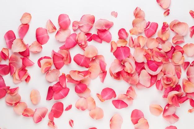 Dia dos namorados. pétalas de flores rosa em branco. Foto Premium