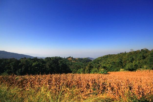 Dificuldade em cortar árvores na montanha e mudar de cultivo Foto Premium