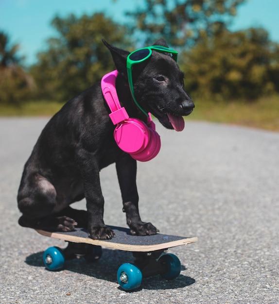 Dog friend cute canine smiling Foto gratuita