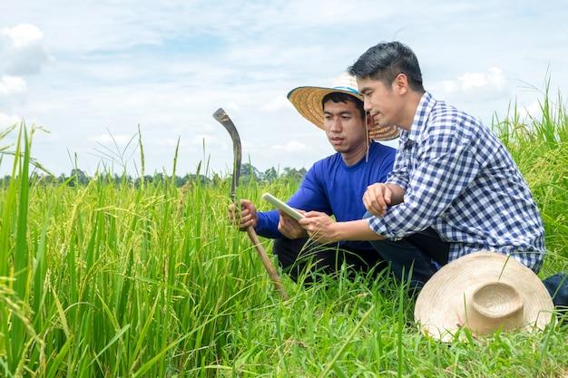 Dois agricultores asiáticos masculinos estão ajoelhados olhando tablet smartphone em campos de arroz verde, céu azul claro. Foto Premium