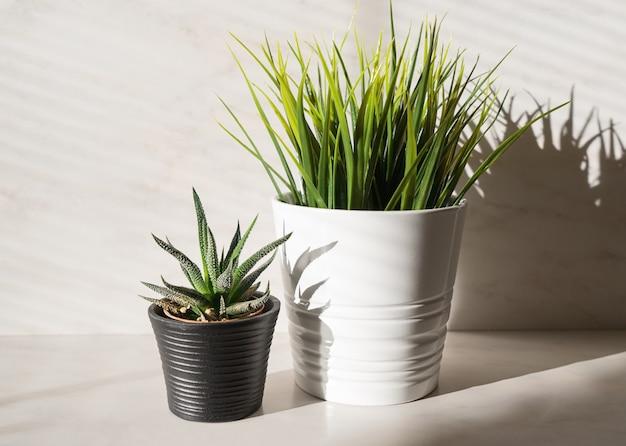 Dois cactos de plantas em vasos e grama artificial Foto Premium
