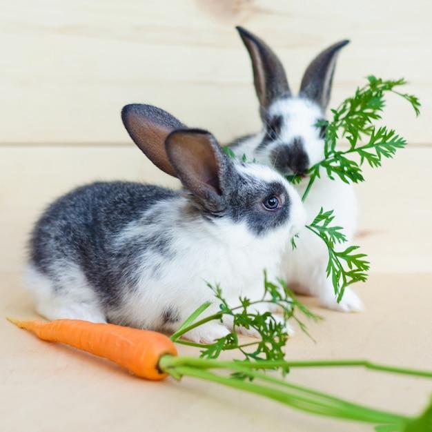 Dois coelhinhos bebê comendo vegetais frescos, cenoura, folhas. alimentando o roedor com uma dieta balanceada, comida. Foto Premium