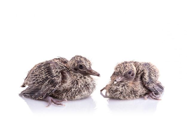 Dois dos filhotes no fundo branco Foto Premium