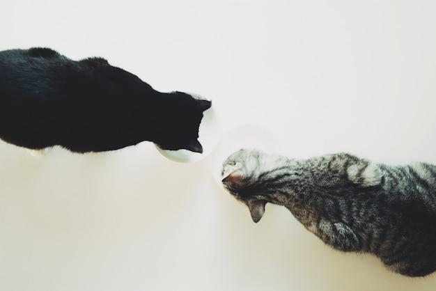 Dois gatos comem vista superior. amizade animal de estimação. Foto Premium