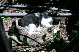 Dois gatos peludos Foto gratuita