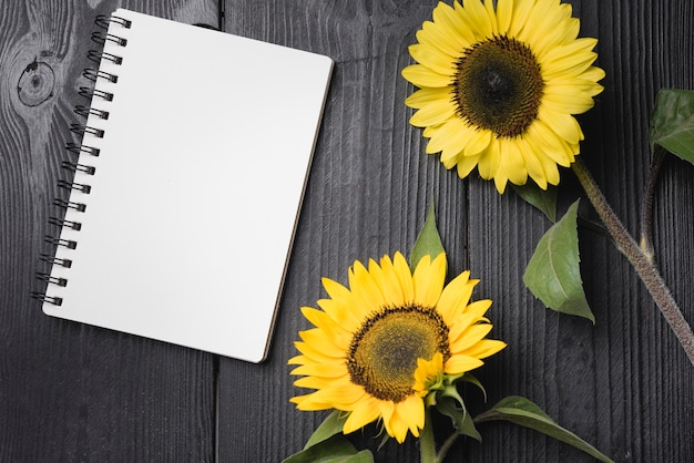 Dois girassóis amarelos com caderno espiral em branco na mesa de madeira Foto gratuita