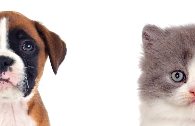 Dois lindos filhotes Foto Premium
