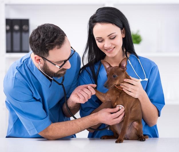 Dois médicos veterinários com cão durante o exame. Foto Premium