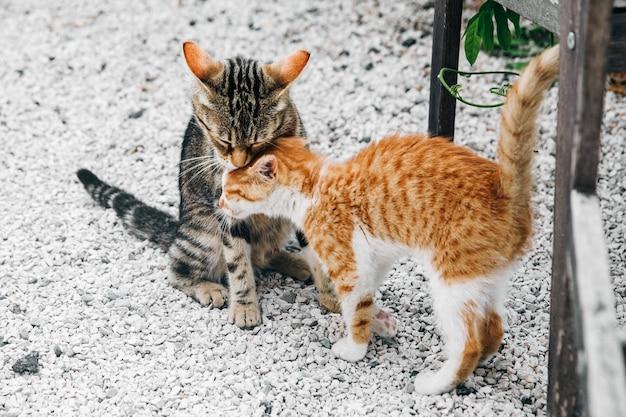 Dois pequenos gatinhos pretos e vermelhos, inclinando-se uns aos outros sobre o gr Foto gratuita
