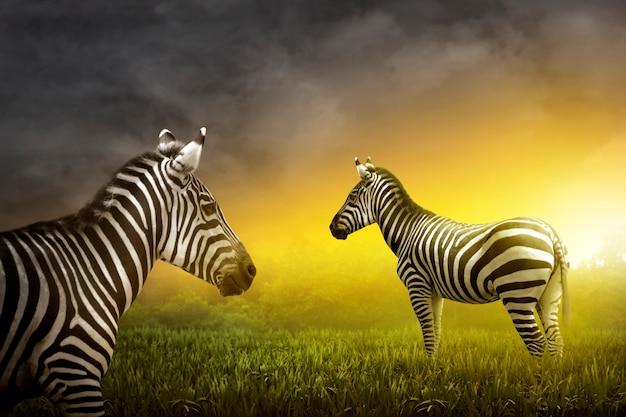 Dois, zebra, ligado, a, grassland Foto Premium