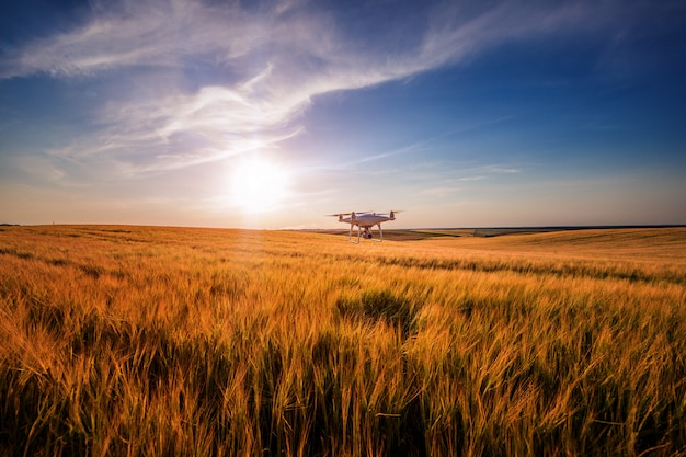 Drone quad helicóptero no campo de milho verde Foto Premium