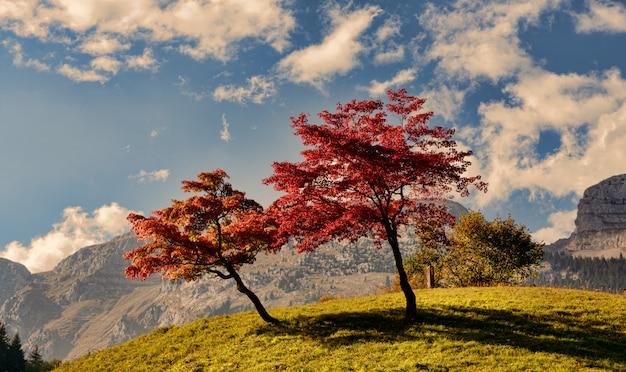 Duas árvores com lindas cores de outono Foto Premium