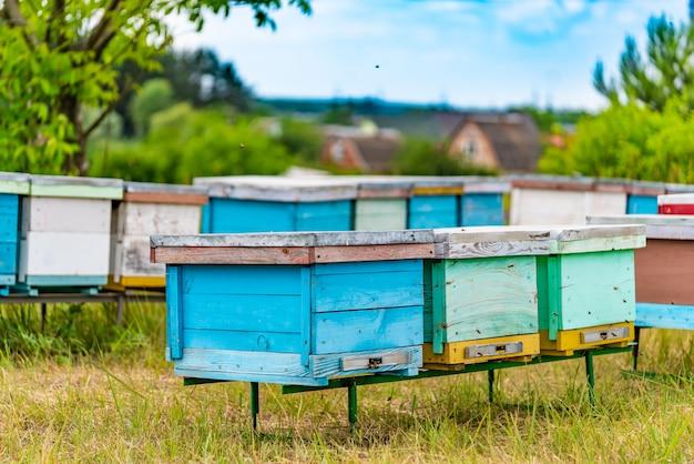 Duas fileiras de colmeias coloridas de madeira em forma de caixas em um apiário em um prado Foto Premium