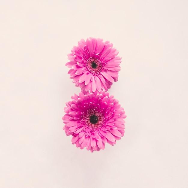 Duas flores gerbera rosa na mesa branca Foto gratuita