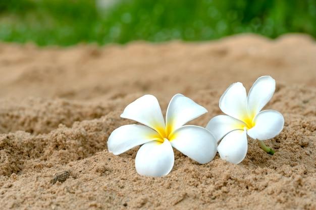Duas flores para a praia de areia no fundo verde turva Foto Premium