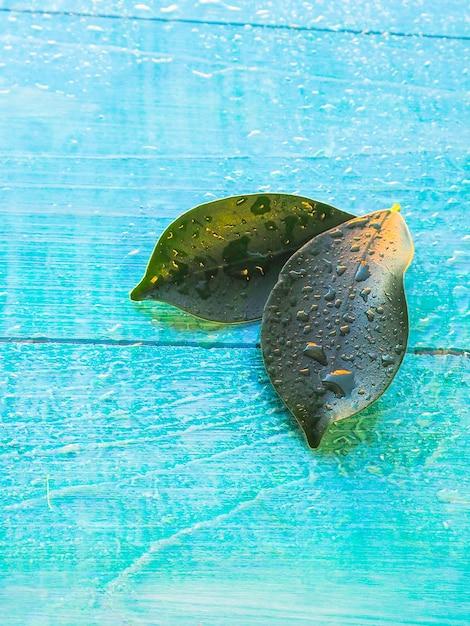 Duas folhas verdes sobre o fundo de madeira com gotas de água como pano de fundo para o conceito de spa Foto Premium