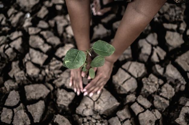 Duas mãos estão plantando árvores e solo seco e rachado em condições de aquecimento global. Foto gratuita