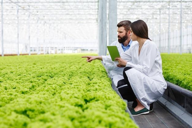 Duas pesquisas homem e mulher examinar vegetação com um comprimido em uma estufa toda branca Foto gratuita