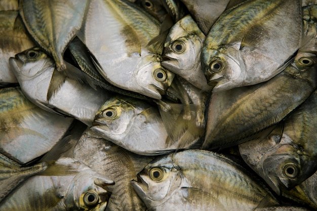Dúzia de peixe fresco do mar pronto de alimentos fazendo na tailândia mercado fresco Foto Premium