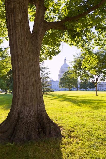 Edifício capitólio, washington dc jardim do sol, eua Foto Premium