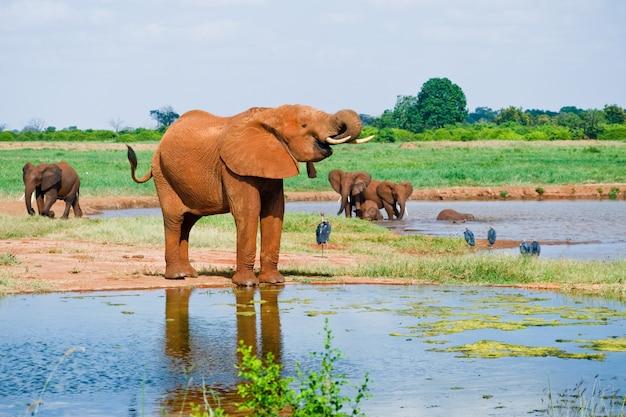 Elefante africano macho enorme Foto Premium