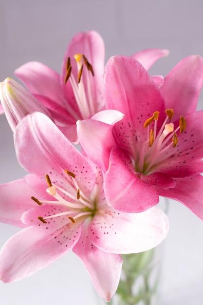 Elegantes lindas flores cor de rosa, lírios close-up em branco Foto Premium