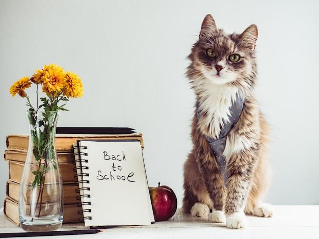 Encantador, cinza, fofo gatinho e livros antigos Foto Premium