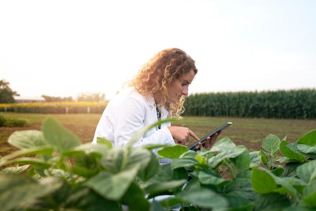 Engenheira agrônoma verificando colheitas no campo com um computador tablet Foto gratuita