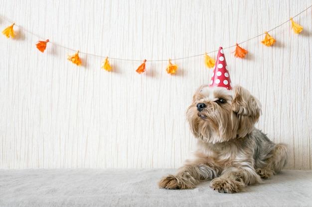 Engraçado, cute, yorkshire terrier, yorkie, cão, em, vermelho, partido, chapéu, boné Foto Premium