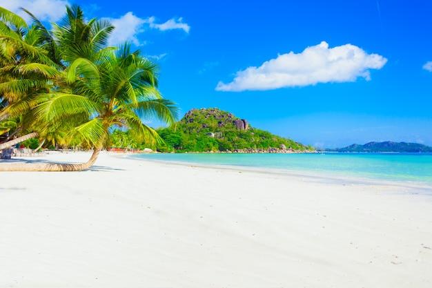 Ensolarada praia do paraíso tropical do caribe, com areia branca e palmeiras Foto Premium