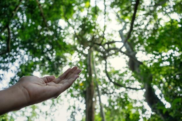 Entregue a oração para abençoar do deus no fundo do sol e da floresta, conceito de christian religion. Foto Premium