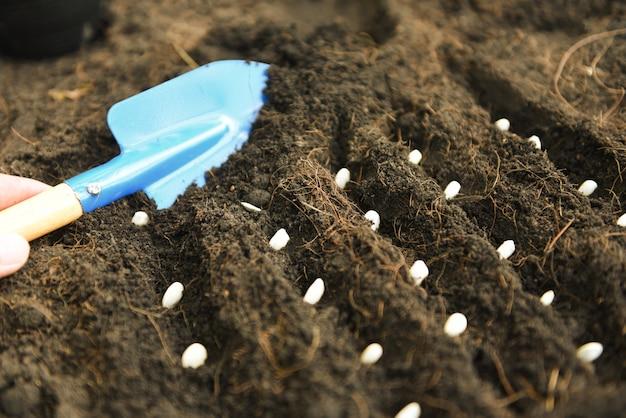 Entregue a plantação da semente de abóbora no solo na agricultura do jardim vegetal. conceito de obras de jardinagem. close-up, foco seletivo Foto Premium