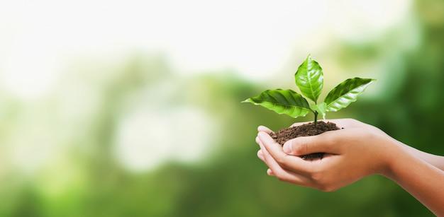 Entregue guardar a planta nova na natureza do verde do borrão. conceito eco terra dia Foto Premium