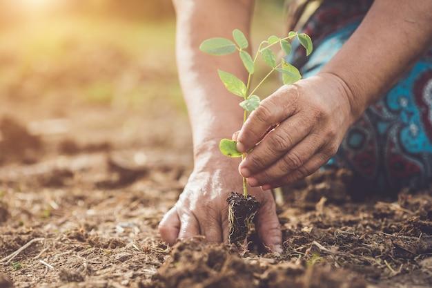 Entregue guardar e plantar a árvore de ervilha nova da borboleta no solo. salvar o mundo e o conceito de ecologia Foto Premium