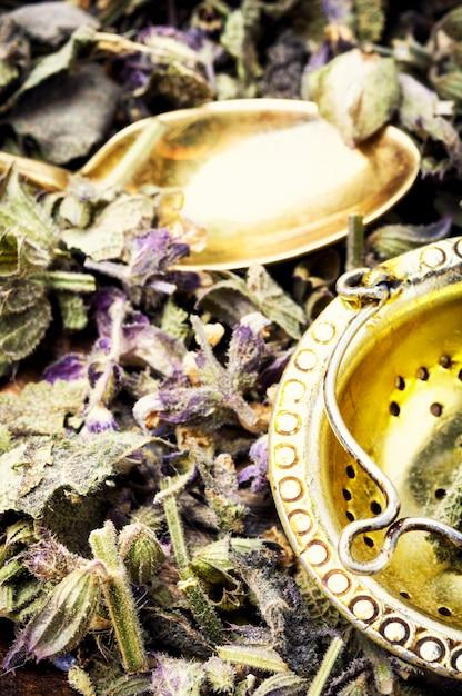Ervas e medicina natural Foto Premium