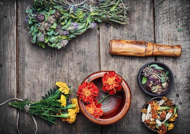 Ervas medicinais e plantas Foto Premium