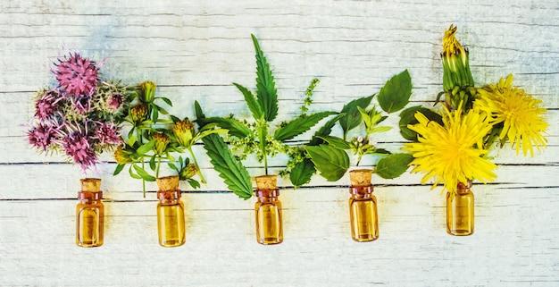 Ervas medicinais. foco seletivo. extrato de plantas da natureza. Foto Premium