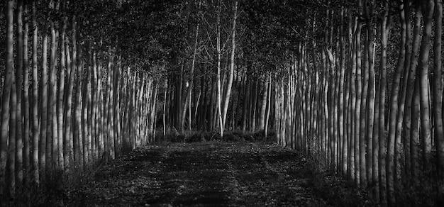 Escala de cinza de uma floresta coberta de árvores e folhas - ótimo para conceitos assustadores Foto gratuita