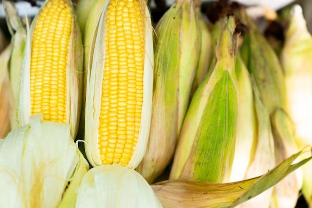 Espiga de milho cru fresco no milho empilhado Foto Premium