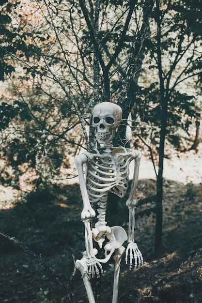 Esqueleto assustador na floresta ensolarada Foto gratuita