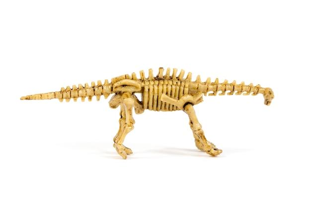 Esqueleto de dinossauro isolado no branco Foto Premium