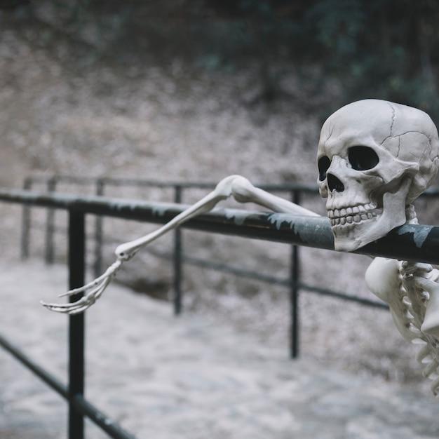 Esqueleto decorativo descansando no parapeito e olhando para longe Foto gratuita