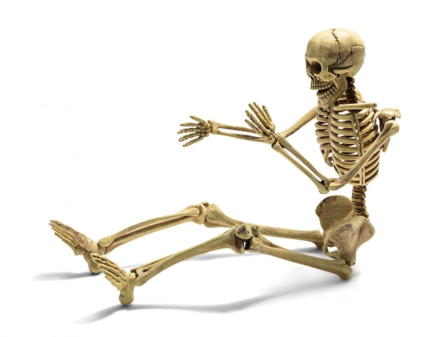 Esqueleto humano isolado Foto Premium