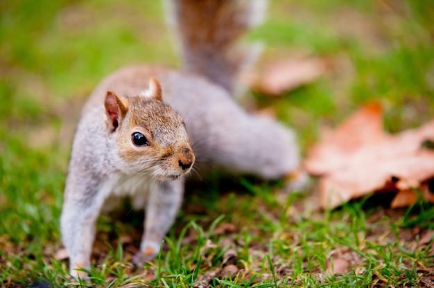 Esquilo bonito em pé na grama Foto gratuita